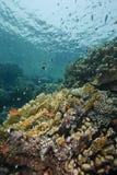 Reefscape en los shallows, subacuáticos. Fotos de archivo libres de regalías