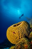 Reefscape with Large Sponge and Scuba Diver Silhouette stock images