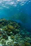 Reefscape mit Rotbarschmasse Stockbilder