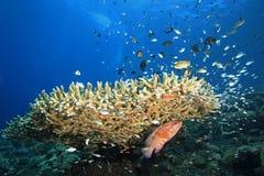 Reefscene con i pesci ed i coralli Fotografie Stock Libere da Diritti
