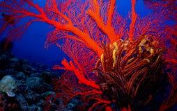 Reek coral Imagem de Stock Royalty Free