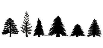 Reeks Altijdgroene Bomen Stock Foto
