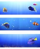 Reeks banners met tropische vissen Stock Afbeelding