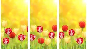 Reeks banners met tulpen op groene zonnige achtergrond Royalty-vrije Stock Afbeeldingen