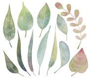 Reeks bladeren van de waterverffantasie Stock Afbeeldingen