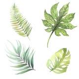 Reeks bladeren van tropische installaties De illustratie van de waterverf Stock Foto