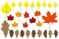 Reeks bladeren voor uw ontwerp Stock Afbeelding
