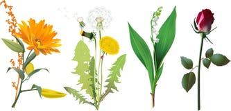 Reeks bloemen. Stock Afbeelding