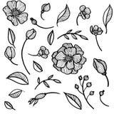 Reeks bloemen en bladeren Royalty-vrije Stock Fotografie
