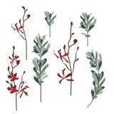 Reeks bloemen en bladeren, hand getrokken stijl Royalty-vrije Stock Fotografie