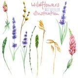 Reeks bloemen geïsoleerde elementen: wildflowers, lupine, dryflowers, eustoma Royalty-vrije Stock Afbeelding