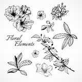 Reeks bloemenelementen Stock Afbeelding