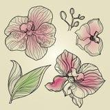Reeks bloemenelementen van het orchideeontwerp Royalty-vrije Stock Afbeeldingen
