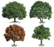 Reeks bomen die op wit wordt geïsoleerd$ Royalty-vrije Stock Afbeeldingen