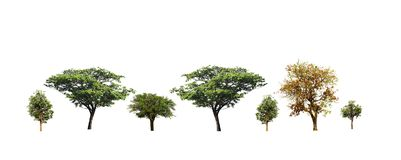Reeks bomen op witte achtergrond wordt ge?soleerd die royalty-vrije stock afbeelding