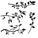 Reeks boomtakken met bladeren en bessen Stock Afbeeldingen