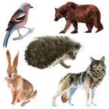 Reeks bosdieren Waterverfillustratie op witte achtergrond vector illustratie