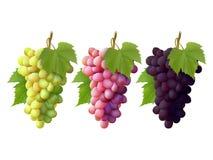 Reeks bossen van druiven royalty-vrije illustratie