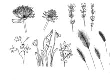 Reeks botanische bloemen bellflower sneeuwvlok vector illustratie