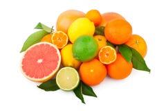 Reeks citrusvruchten Stock Foto's