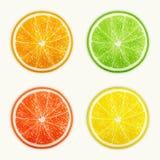 Reeks citrusvruchten. Sinaasappel, Kalk, Grapefruit, Citroen. vector illustratie