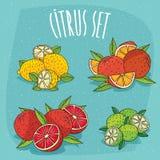 Reeks cliparts organische citrusvruchten Royalty-vrije Stock Afbeeldingen