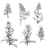 Reeks contour vectordiebloemen door inkt worden getrokken Contour Clipart voor gebruik in ontwerp stock illustratie