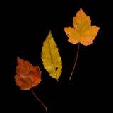 Reeks Dalingsbladeren Stock Afbeeldingen