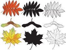 Reeks de herfstbladeren Royalty-vrije Stock Foto's