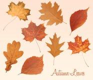 Reeks de herfstbladeren Royalty-vrije Stock Afbeeldingen