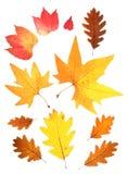 Reeks de herfstbladeren Stock Fotografie