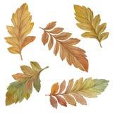Reeks de herfstbladeren die op witte achtergrond wordt ge?soleerd vector illustratie