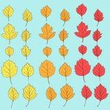Reeks de herfstbladeren met verschillende kleuren Stock Foto