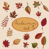 Reeks de herfstbladeren voor uw ontwerp Royalty-vrije Stock Foto