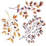 Reeks de herfsttakken op witte achtergrond wordt geïsoleerd die Hand getrokken waterverfillustratie vector illustratie