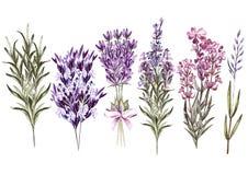 Reeks de lavendelbloemen van het waterverfboeket op witte achtergrond stock illustratie