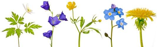 Reeks de lente bosbloemen op wit Stock Foto