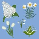 Reeks de lentebloemen op een blauwe achtergrond Witte bloemen royalty-vrije illustratie