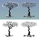 Reeks de winterbomen in sneeuw en stenen Stock Fotografie