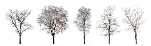 Reeks de winterbomen zonder bladeren op wit wordt geïsoleerd dat stock fotografie