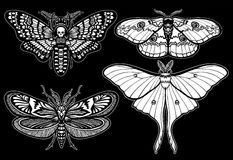 Reeks decoratieve vlinders Stock Afbeeldingen