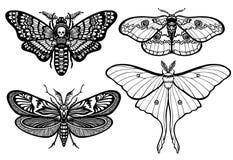 Reeks decoratieve vlinders Royalty-vrije Stock Foto's