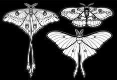 Reeks decoratieve vlinders Stock Fotografie