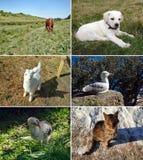 Reeks dieren royalty-vrije stock afbeelding
