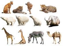 Reeks dieren. Geïsoleerdn met schaduwen stock foto's