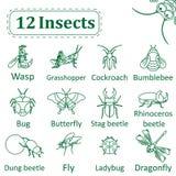 Reeks diverse insecten Royalty-vrije Stock Foto