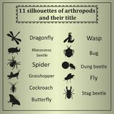 Reeks diverse insecten Royalty-vrije Stock Afbeelding