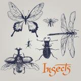 Reeks diverse insecten. Vector. Stock Afbeeldingen