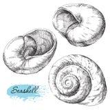 Reeks diverse overzeese shells Stock Foto's