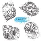 Reeks diverse overzeese shells Stock Afbeelding